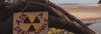 Radio Cymru: ynni niwclear yng Nghymru